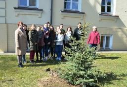 Maturzyści posadzili swoje drzewko_11