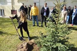 Maturzyści posadzili swoje drzewko_2