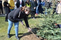 Maturzyści posadzili swoje drzewko_6